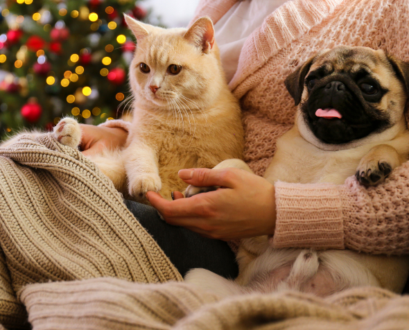 Person sitting on couch with dog and cat with holiday decor