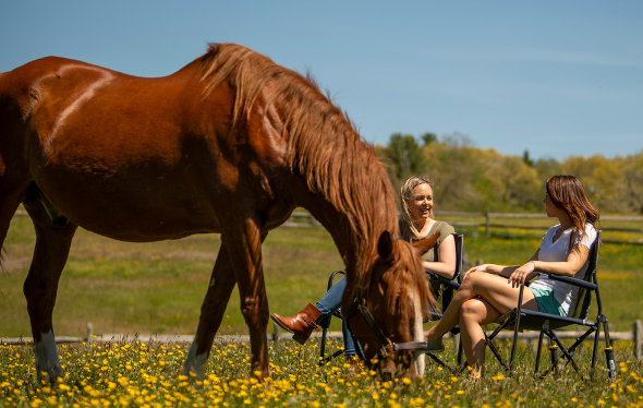 Horse eating grass in a meadow with two women seated behind talking
