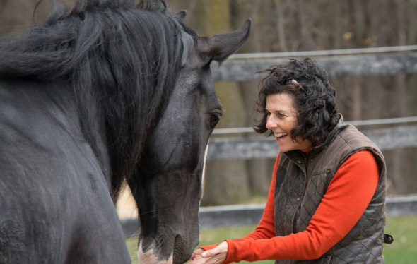 Woman interacting with black horse outside in a grassy field