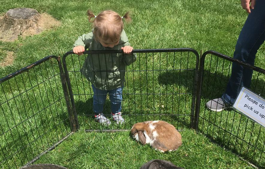 Child looking at bunny