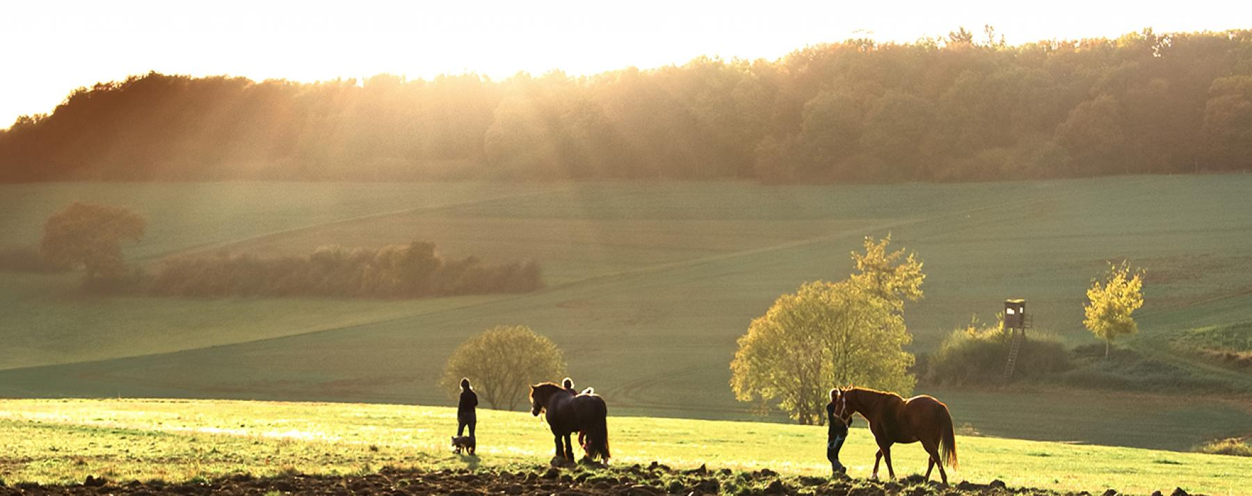 Horses and People in a Field